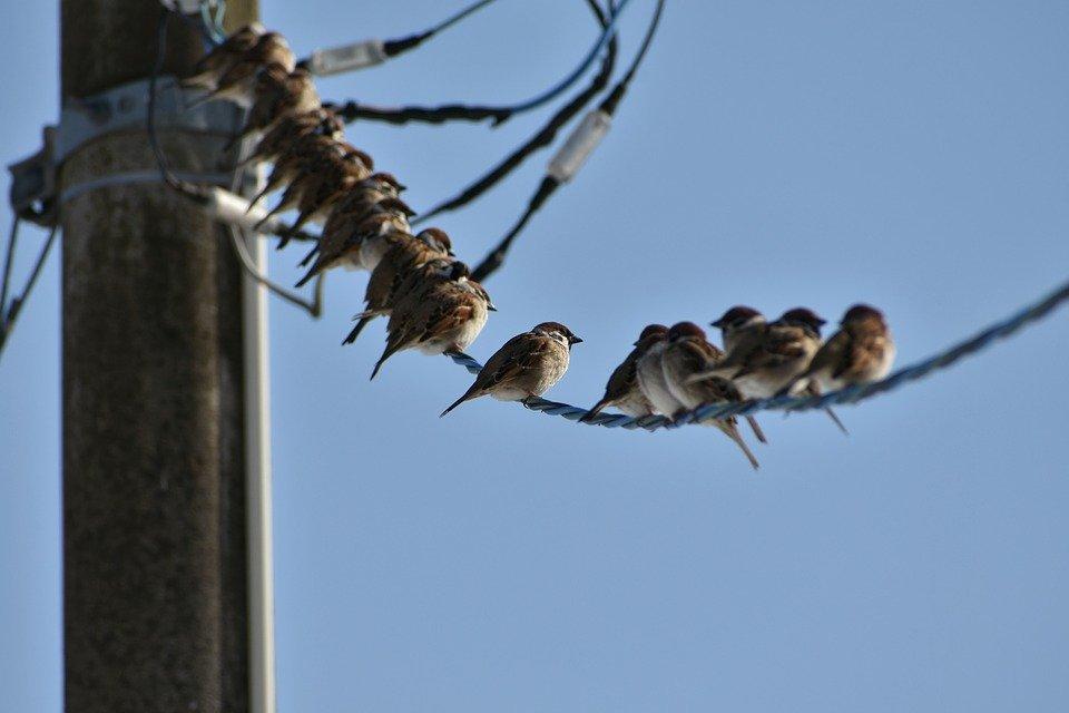 curiosidades sobre la energía y la naturaleza con aves